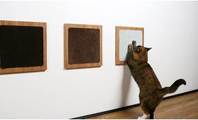 Красивые фото с орущими котами, поющими кошками и смеющимися котятами.